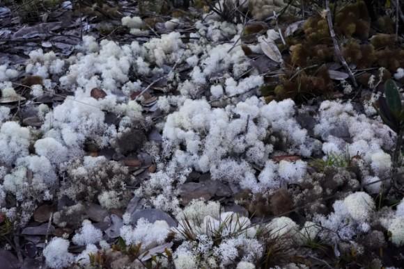 アウヤンテプイの頂上に生える生物