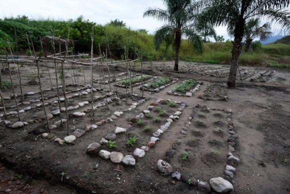 完成した野菜畑