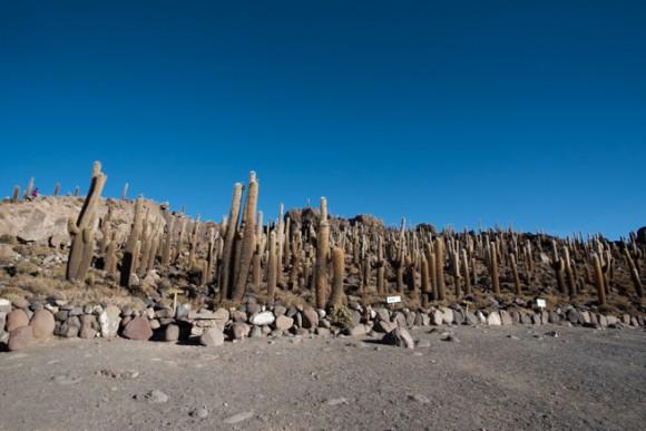 サボテンだらけのインカワシ島