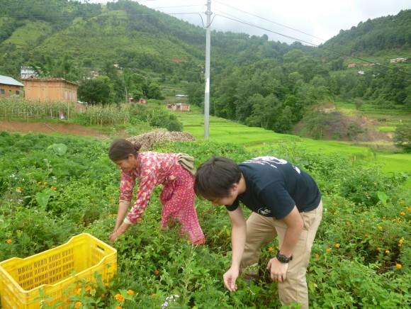 ネパールの青年海外協力隊コミュニティ開発