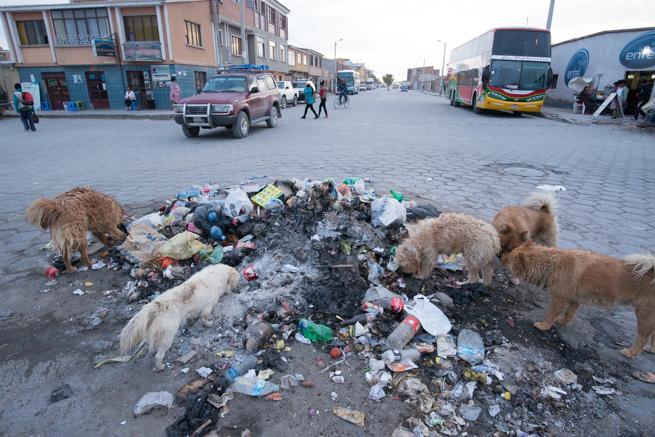 ゴミを散らかす野犬