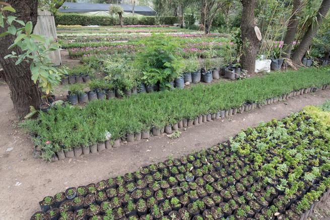 ティキパヤ市の苗木生産場