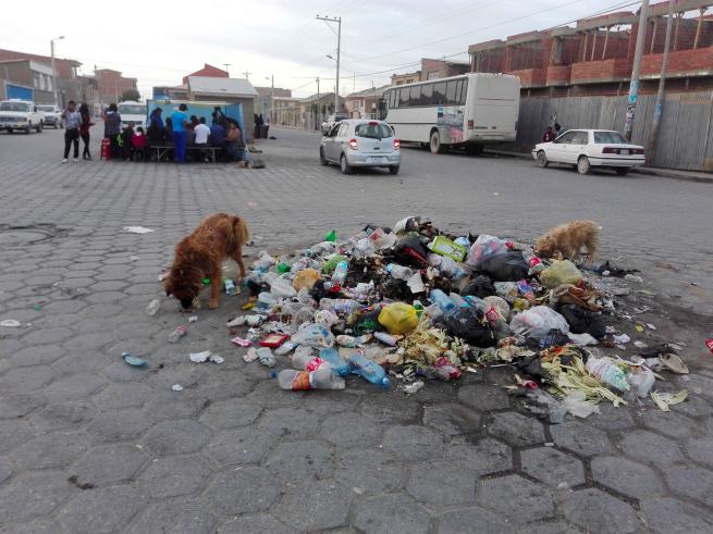 ゴミを漁る犬