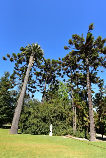 世界中の木が集まる庭