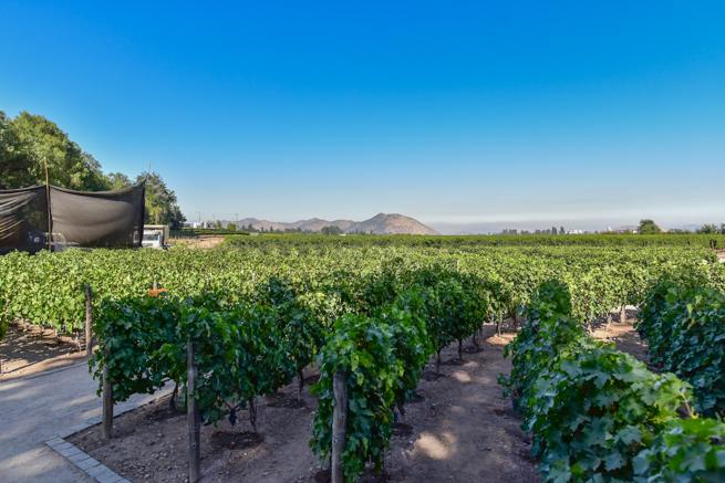 チリ・サンチアゴの広いブドウ畑