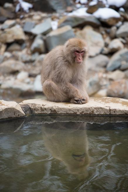 温泉の縁に座る野生の猿