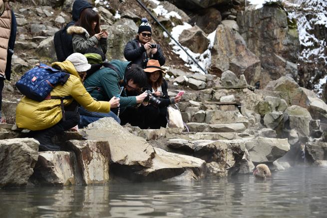 温泉に入る猿を撮影するカメラマン