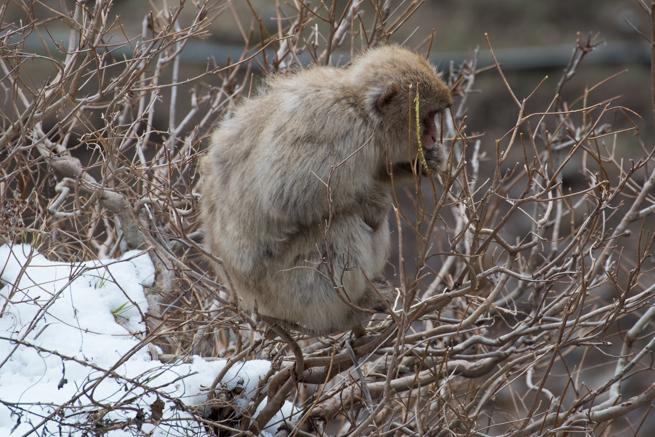 木の枝にとまっている猿