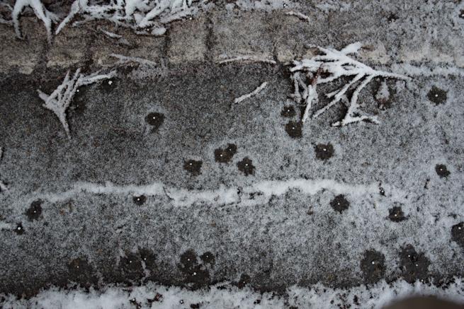 塩カルで溶ける雪