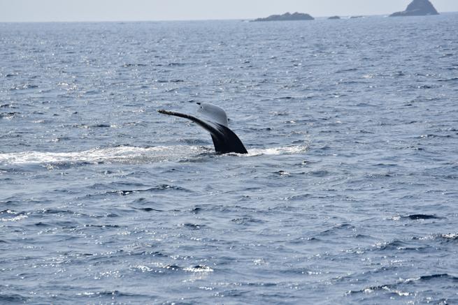 潜水を始めた鯨