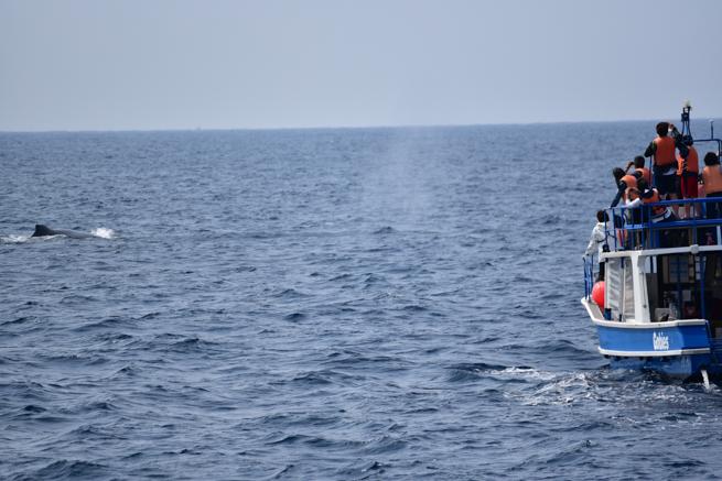 鯨の潮吹き