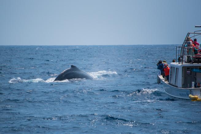 ザトウクジラの背中