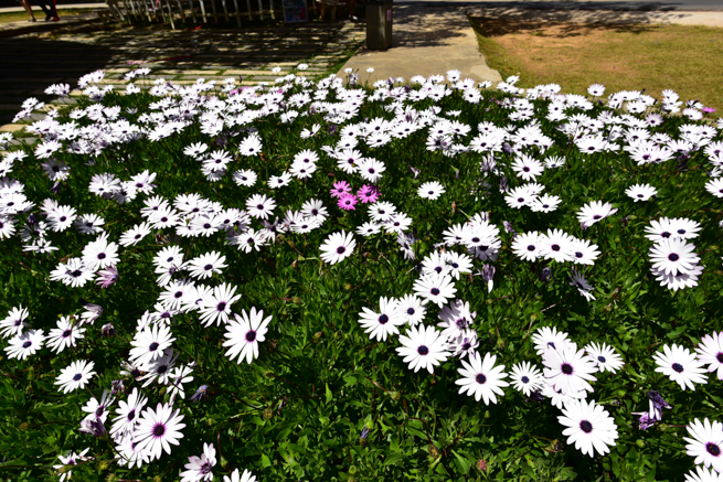 ダラットの愛の谷の花壇