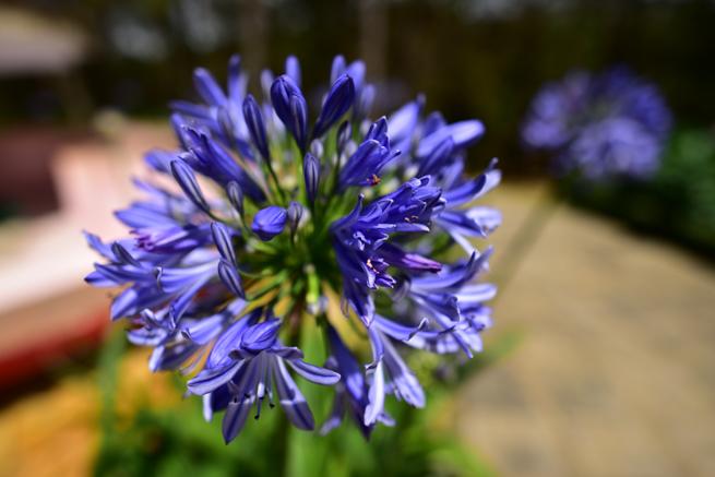 ダラットの愛の谷の花