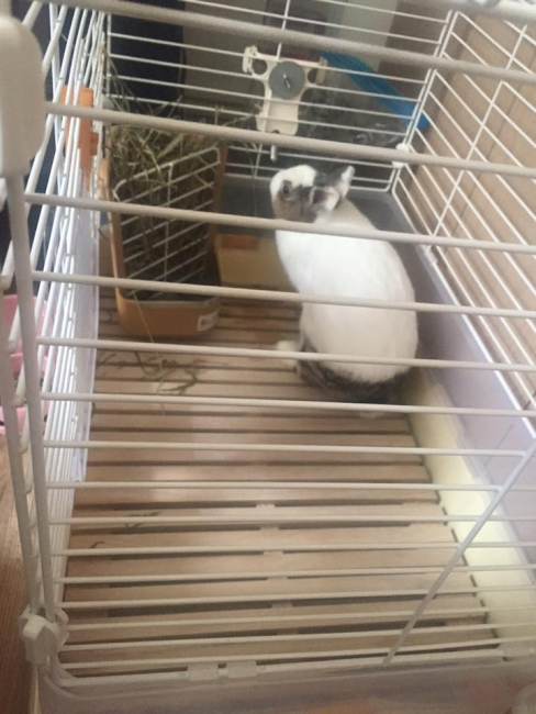 台南のメイドカフェのウサギ