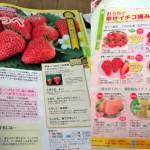苺ソムリエとして世界トップ5の種苗会社サカタのタネ様のイチゴ苗パンフレットを監修しました