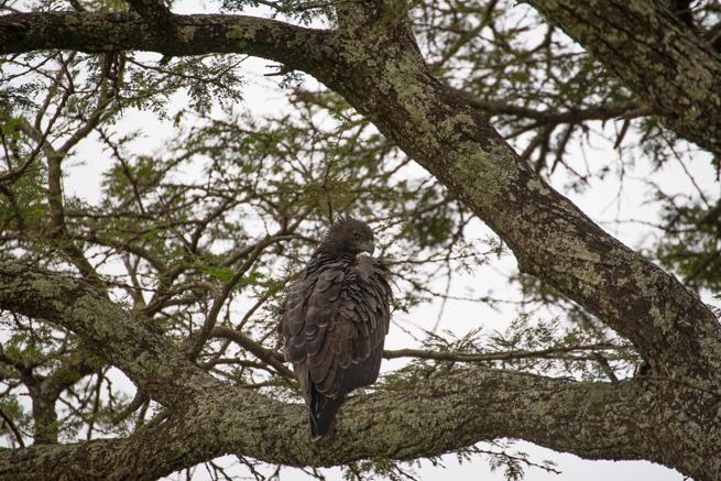 ナイロビ国立公園の鳥