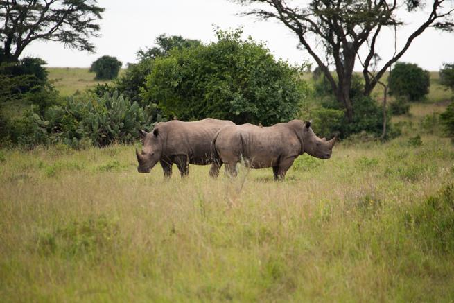 ナイロビ国立公園のサイ