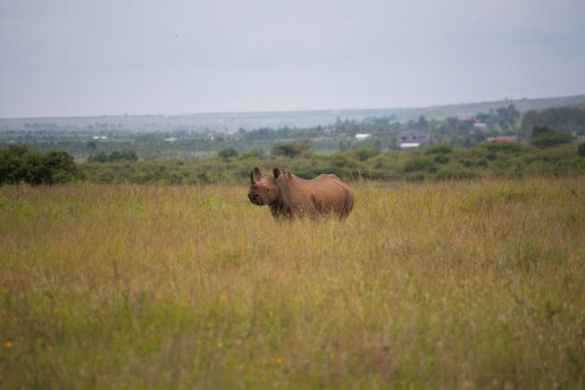 ナイロビ国立公園の巨大なサイ