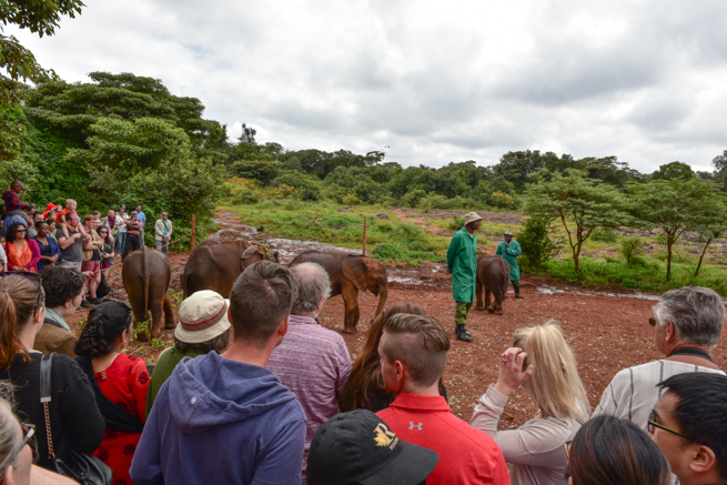 ナイロビにある像の保護施設