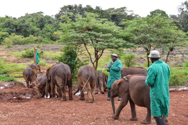 小象について説明する飼育員
