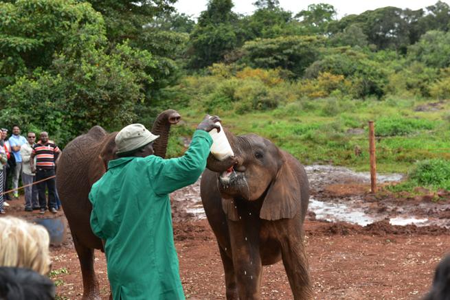 小象にミルクをあげる飼育員