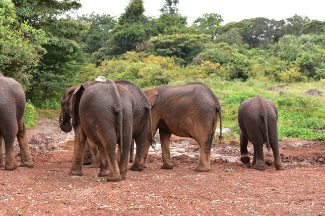 保護された子供のゾウ達