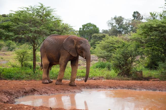 ケニアで保護された子供のゾウ