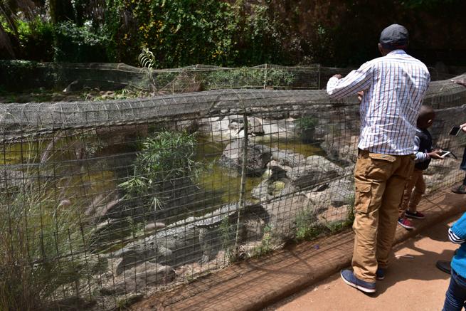 ワニを眺めるケニア人