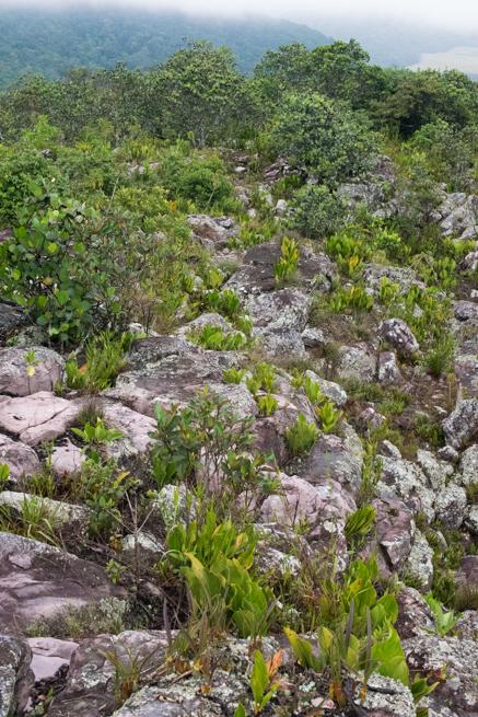 アウヤンテプイトレッキングの風景