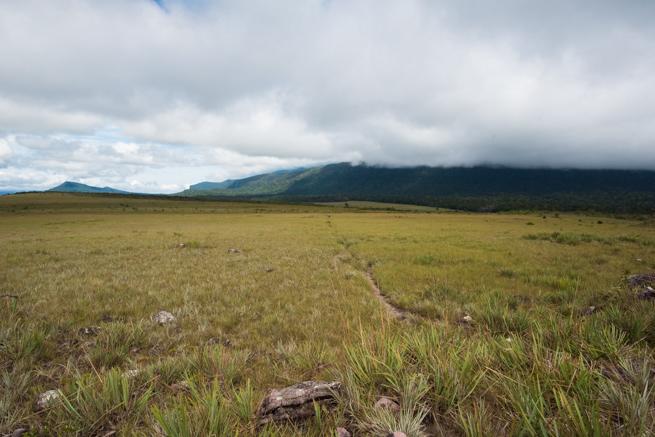 アウヤンテプイトレッキング2日目の草原地帯