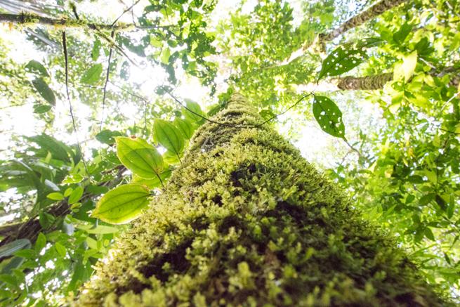 アウヤンテプイの苔が生えた木