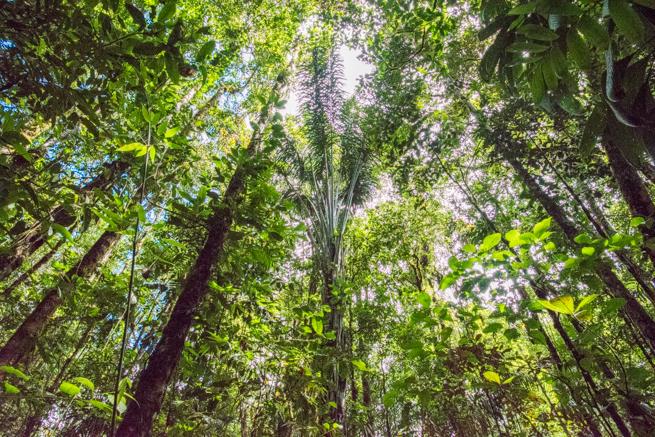 アウヤンテプイトレッキング2日目のジャングル