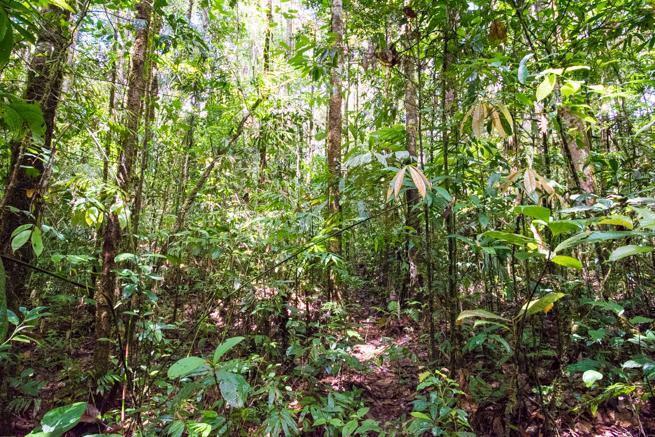 アウヤンテプイトレッキング2日目の密林