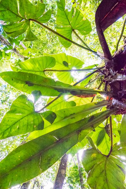 アウヤンテプイで木に生えた草