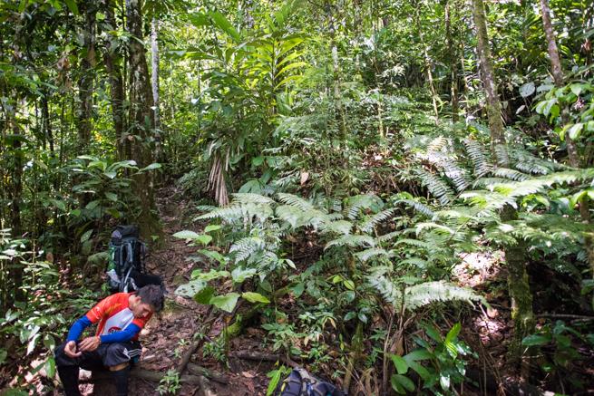 アウヤンテプイトレッキングのジャングル