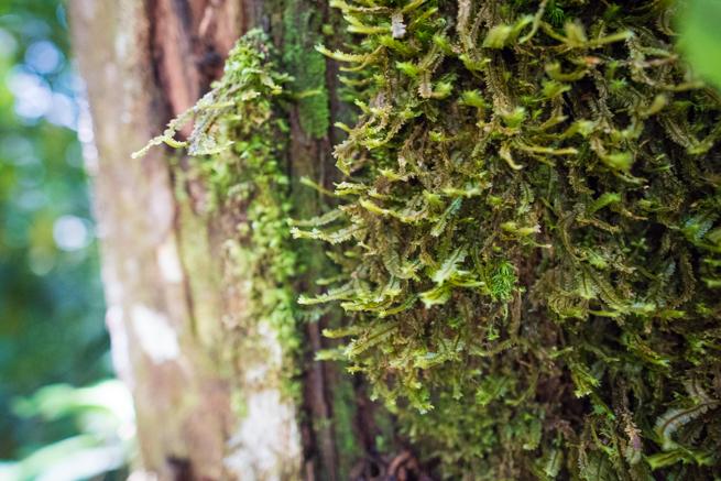 アウヤンテプイトレッキングの苔