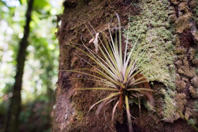 アウヤンテプイトレッキングの奇妙な植物