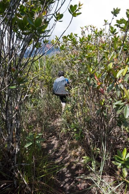 アウヤンテプイトレッキングで小道を歩く