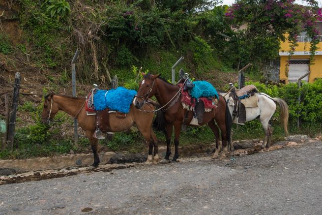 エルペニョールまで行ける馬