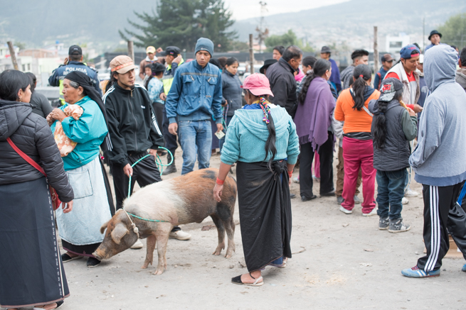 エクアドルのオタバロの家畜市場の豚