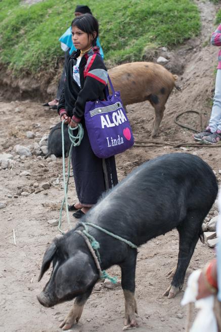 エクアドルのオタバロの家畜市場の豚と少女