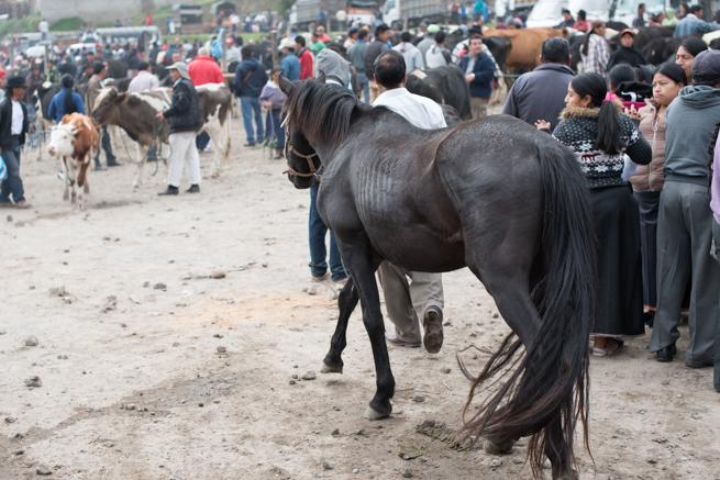 エクアドルのオタバロの動物市の馬