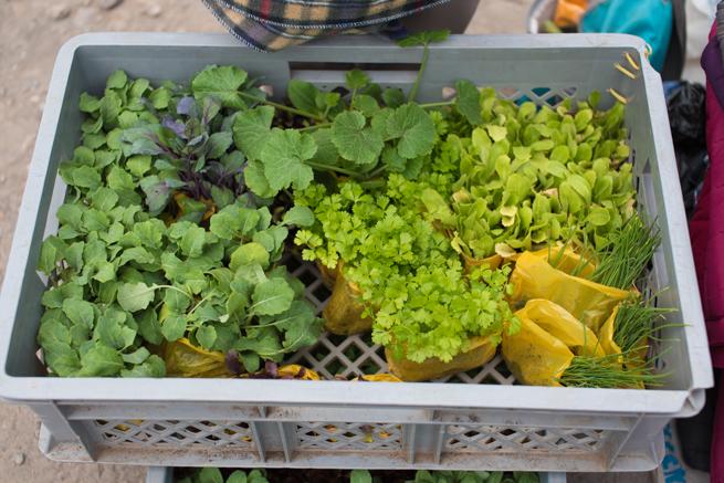 エクアドルのオタバロの動物市の野菜の苗