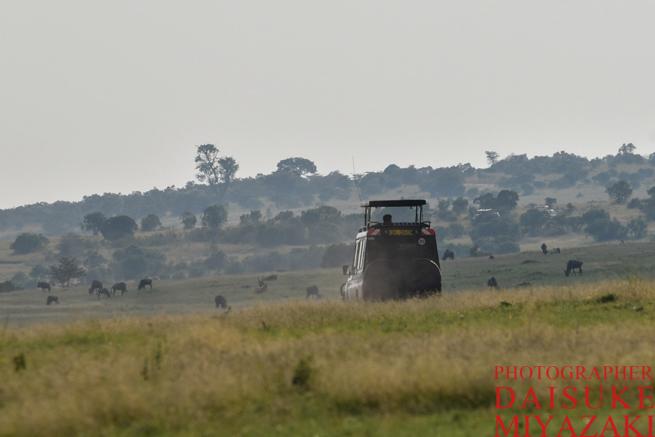 マサイマラ国立公園を走るサファリカー