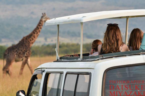 マサイマラ国立公園でキリンより夢中になった美女