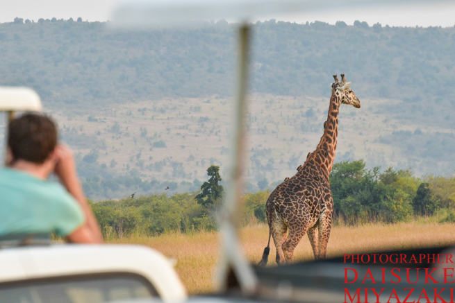 キリンを眺める観光客
