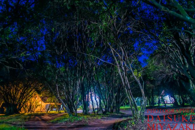 マサイマラ国立公園の夜明け前