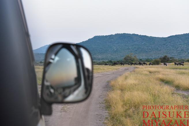 マサイマラ国立公園のサファリツアー2日目の朝
