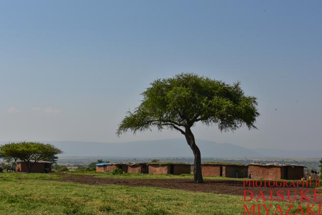 マサイ族の村の木